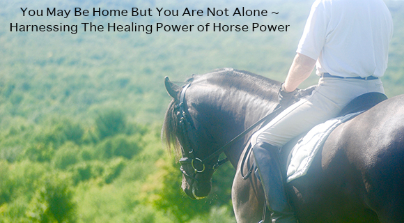 You May Be Home But You Are Not Alone ~ Harnessing The Healing Power of Horse Power