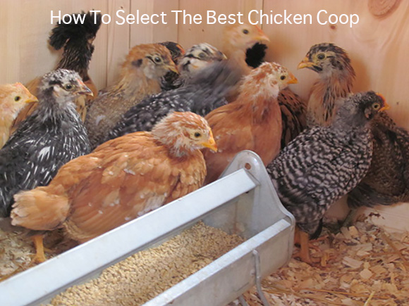 How To Select The Best Chicken Coop