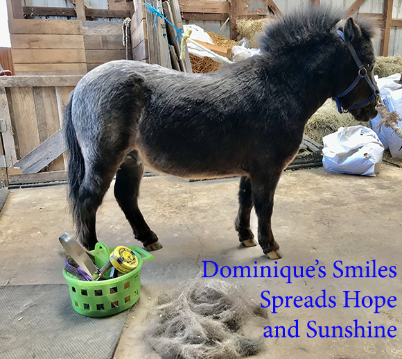 Dominique's Smiles Spreads Hope and Sunshine