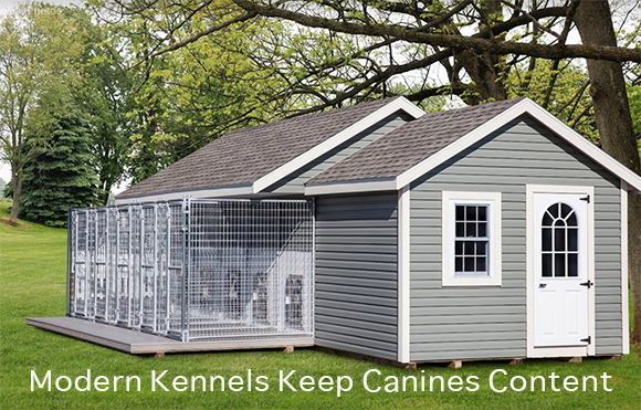 Modern Kennels Keep Canines Content