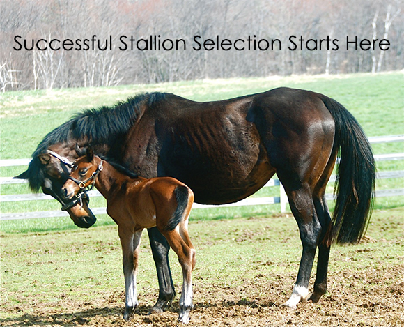 Successful Stallion Selection Starts Her