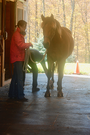 Winter is on the Horizon ~ Is Your Horse Farm Ready? By Nikki Alvin-Smith