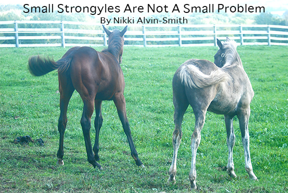 Small Strongyles Are Not A Small Problem By Nikki Alvin-Smith