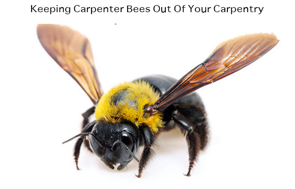 Keeping Carpenter Bees Out Of Your Carpentry