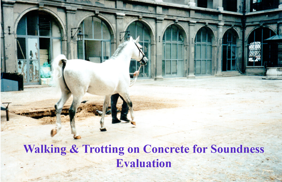 Walking & Trotting on Concrete for Soundness Evaluation
