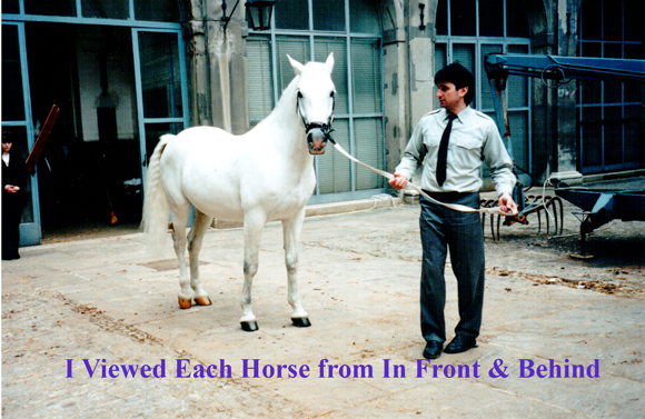 I View Each Horse from In Front & Behind