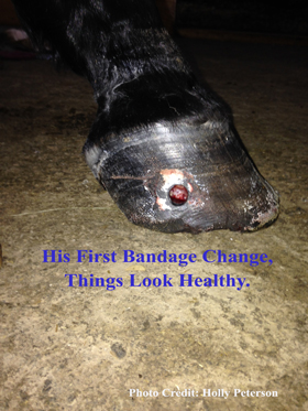 First Bandage Change