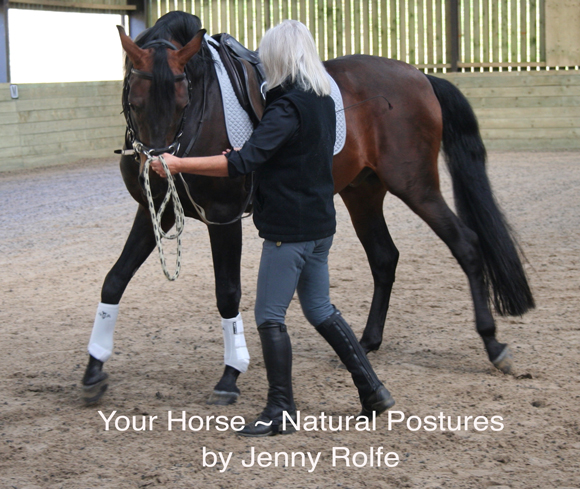 Your Horse ~ Natural Postures  by Jenny Rolfe