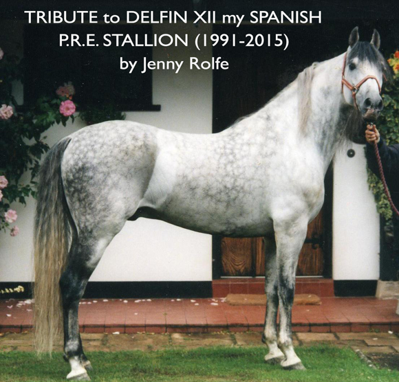 TRIBUTE to DELFIN XII my SPANISH PRE STALLION (1991 - 2015)  by Jenny Rolfe