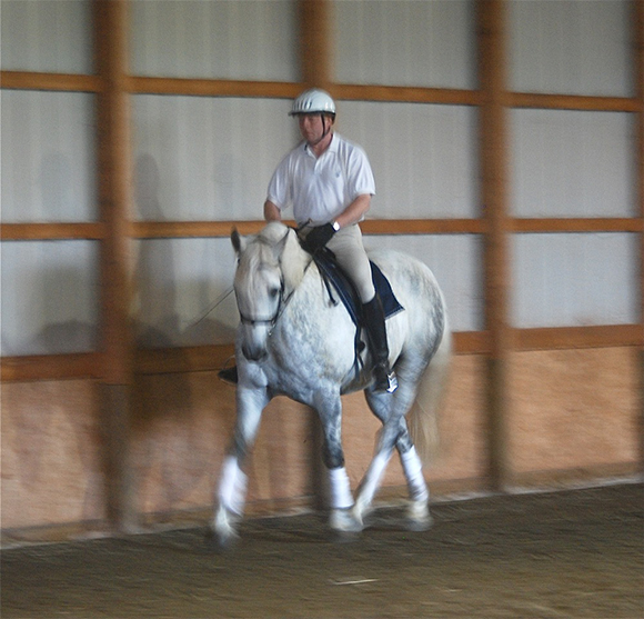 The Key to Success ~ Dressage Schooling Based on Your Horse's Temperament and Conformation ~ Part 1 Conformation