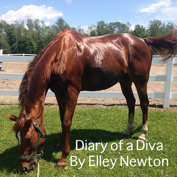 Diary of a Diva By Elley Newton