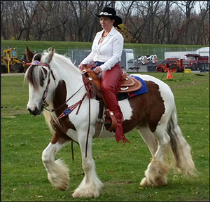 The Gypsy Vanner in North Eastern U.S.A. By Nikki Alvin-Smith