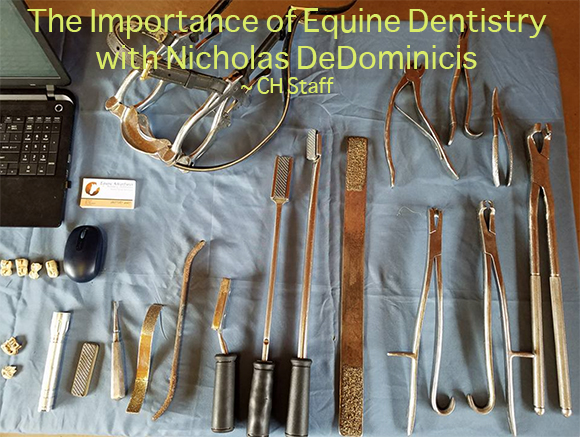 The Importance of Equine Dentistry with Nicholas DeDominicis ~ CH Staff