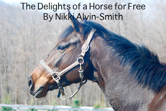 The Delights of a Horse for Free By Nikki Alvin-Smith