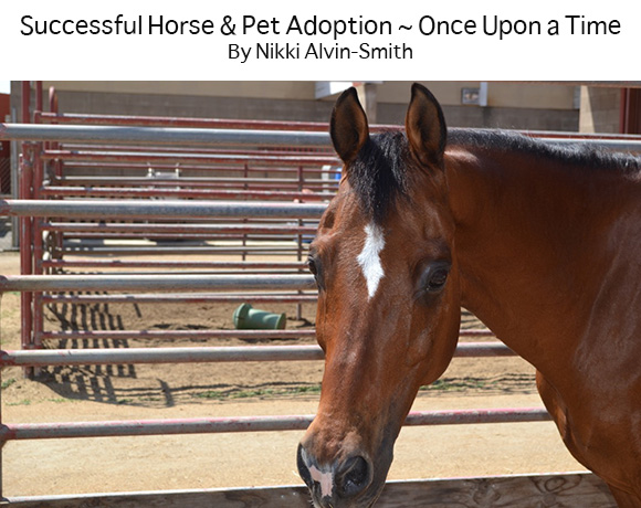 Successful Horse & Pet Adoption ~ Once Upon a Time  By Nikki Alvin-Smith