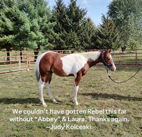 The Ethical Nursemare ~ No Foal Left Behind By Nikki Alvin-Smith
