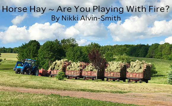 Horse Hay ~ Are You Playing with Fire? By Nikki Alvin-Smith