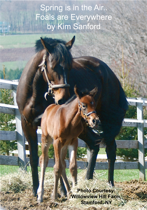 Spring is in the Air…Foals are Everywhere by Kim Sanford