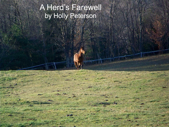 A Herd's Farewell by Holly Peterson