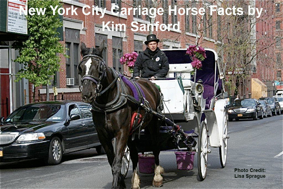 New York City Carriage Horse Facts by Kim Sanford