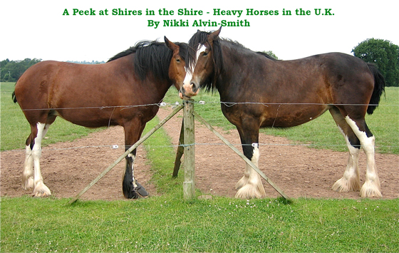 A Peek at Shires in the Shire - Heavy Horses in the U.K. by Nikki Alvin-Smith