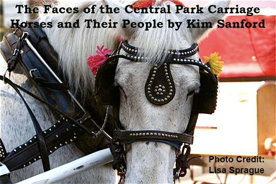 The Faces of the Central Park Carriage Horses and Their People by Kim Sanford