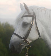 Halter Bridle COmbo